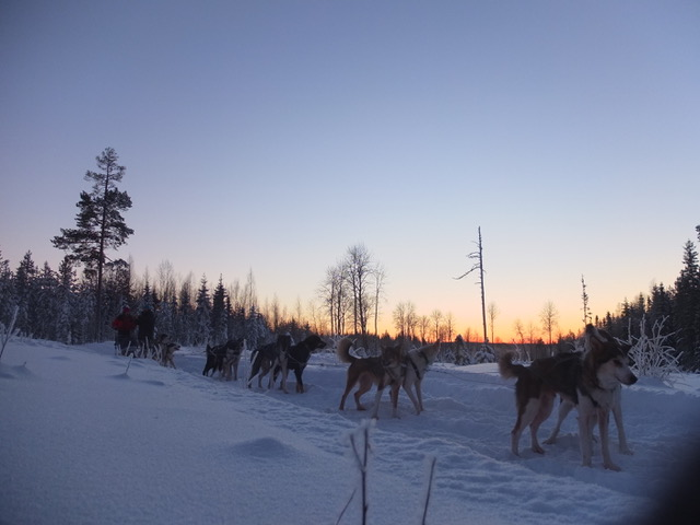 Hondensledetocht zweeds lapland sneeuw