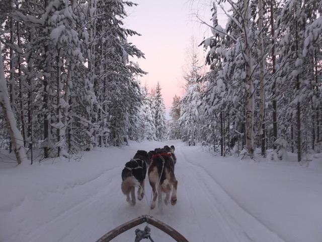 Hondensledetocht Luleå sneeuw