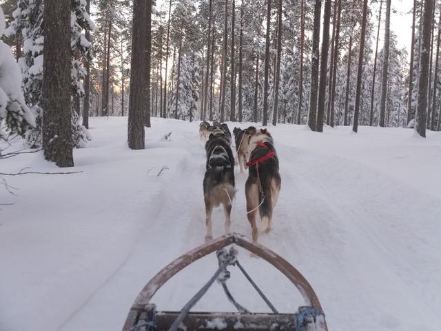 Hondensledetocht Luleå