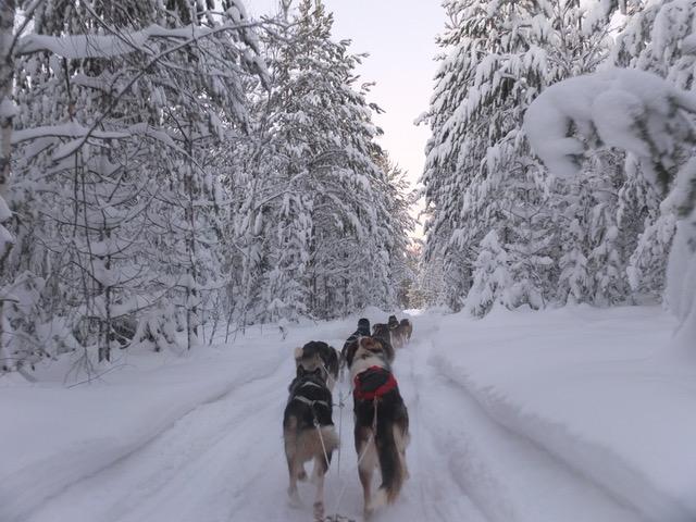 Hondensledetocht zweeds lapland
