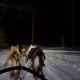 Hondensledetocht - Schaatsen Luleå 2019